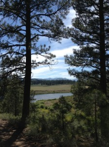 View from the Trail in Truckee