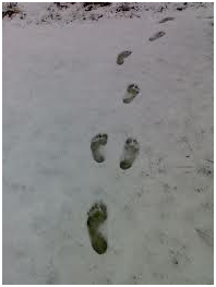 Barefoot Prints in the Snow